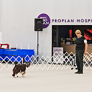 The photography was made during the 2015 Engliish Springer Spaniel Field Trial Association (ESSFTA) Obedience Trial.  The event took place, Friday, September 25th, at Purina Farms, in Gray Summit, MO.