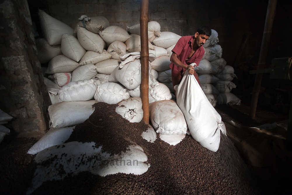 "Labourers work at a coffee  ""Dry"" process factory in Coorg, India,  on Sunday January 31, 2010. Photographer: Prashanth Vishwanathan/Bloomberg News"