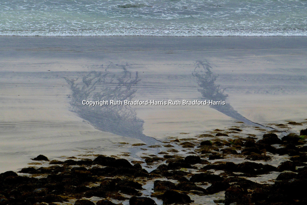 Outflow channels of the stream Allt Bidein an Tighearna on the beach of Traigh Chlithe, Laig Bay, Isle of Eigg, form intricately-branching tree-like patterns in the sand.<br /> <br /> Date taken: 13 June 2016.