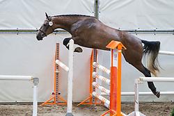 106 - Danieta<br /> KWPN Paardendagen 2011 - Ermelo 2011<br /> © Dirk Caremans