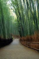 Bamboo forest artistic morning scenery in Arashiyama, Kyoto, Japan.
