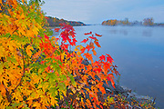 The Saint John River and the Acadian forest in autumn foliage. <br /> <br /> New Brunswick<br /> Canada