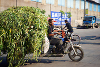 Man taking crop to market on a modified motorcycle in China.