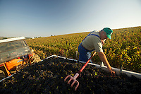 Domaine du Vissoux, Beaujolais..Polish and Turkish workers, and some locals, do the harvest... September 16, 2007..Photo by Owen Franken for the NY Times.