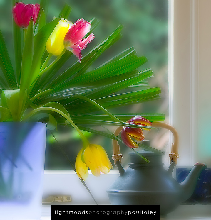 Tulips, teapot and window