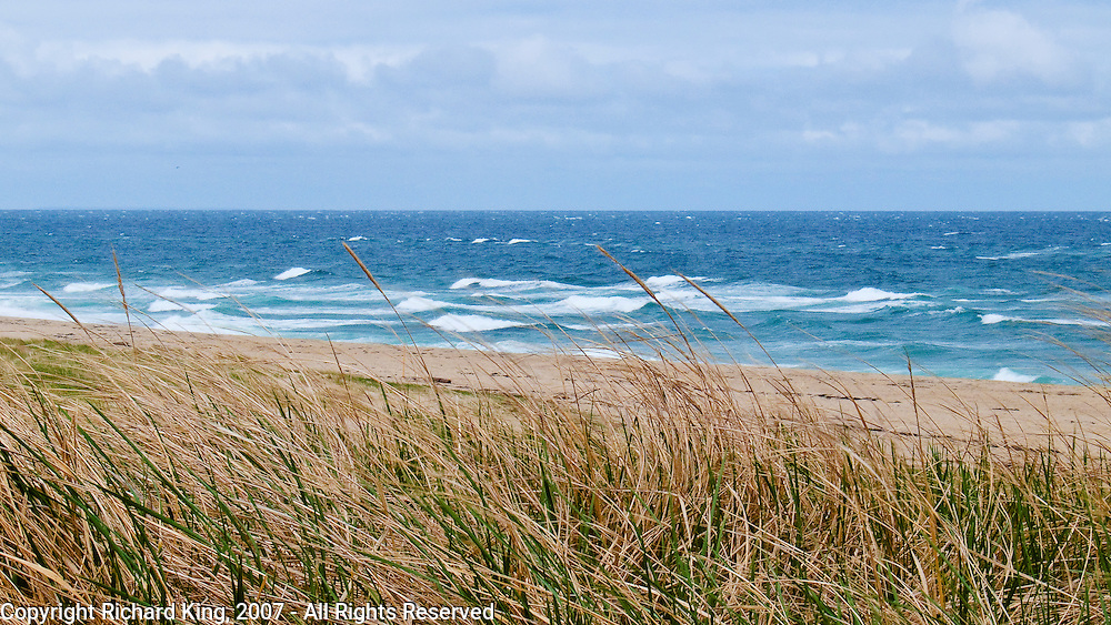 Grasses and White Horses