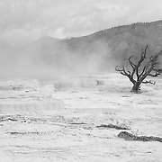 Lone Dead Tree - Mammoth Terrace Hot Springs - Yellowstone National Park - Infrared Black & White