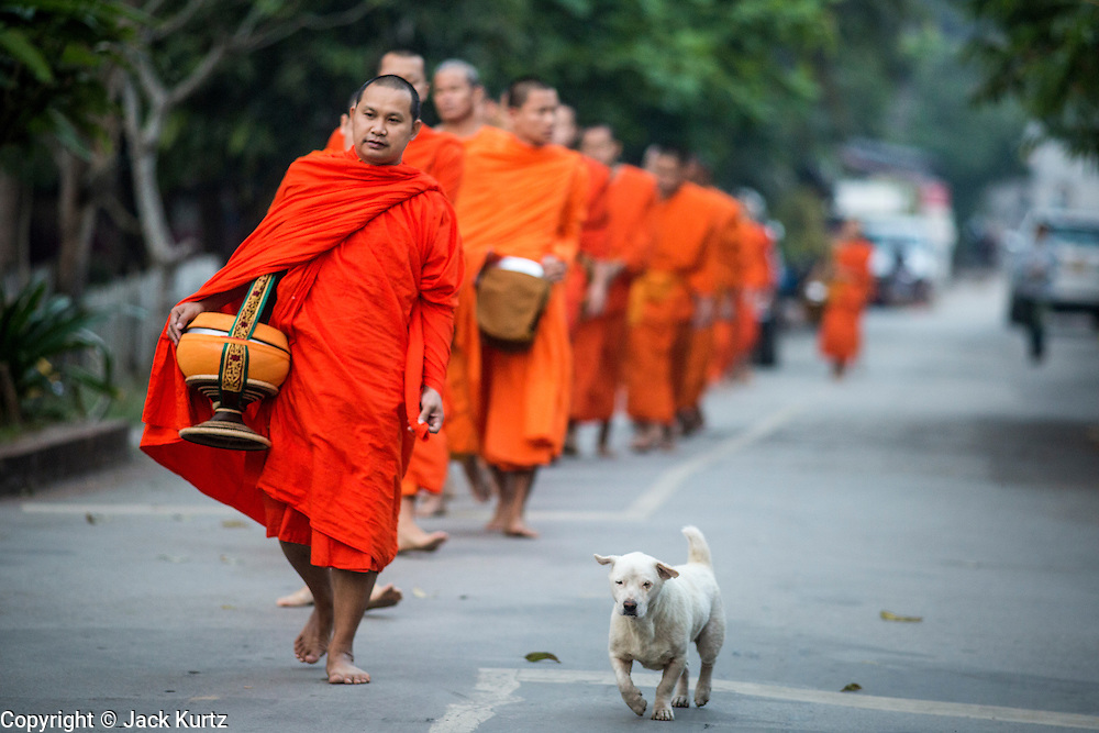 """11 MARCH 2013 - LUANG PRABANG, LAOS: A street dog accompanies a group of Buddhist monks on the morning tak bat in Luang Prabang. The """"Tak Bat"""" is a daily ritual in most of Laos (and other Theravada Buddhist countries like Thailand and Cambodia). Monks leave their temples at dawn and walk silently through the streets and people put rice and other foodstuffs into their alms bowls. Luang Prabang, in northern Laos, is particularly well known for the morning """"tak bat"""" because of the large number temples and monks in the city. Most mornings hundreds of monks go out to collect alms from people.    PHOTO BY JACK KURTZ"""