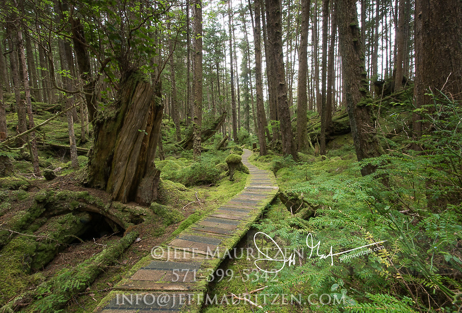 Forest path through the lush rainforest on SGang Gwaii, Haida Gwaii, Queen Charlotte Islands, Gwaii Haanas National Park, British Columbia, Canada.