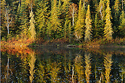 Morning light on shoreline trees of creek<br /> Near Kakabeka Falls<br /> Ontario<br /> Canada