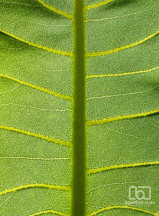 A macro shot of a sunlit green leaf.