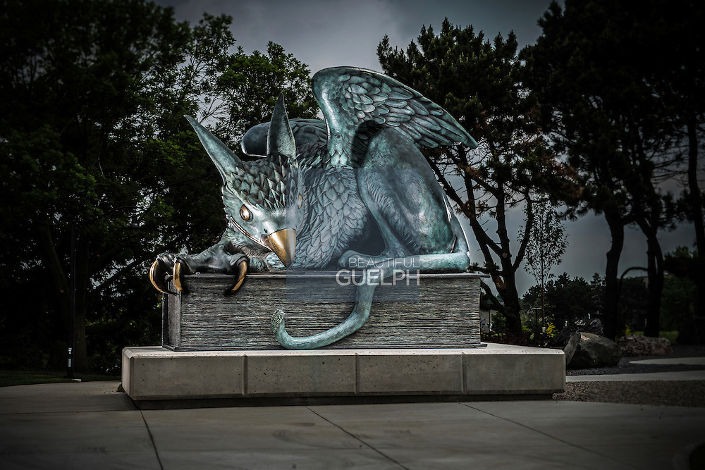 The Gryphon at University of Guelph.  At the corner of Stone Road and Gordon Street is this beautiful sculpture, guarding campus.  Photo by Andrew Goodwin