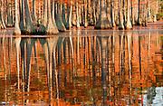 Cypress Fall Impression