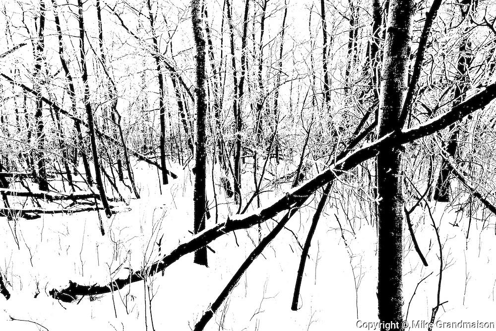 Winter trees in Seine River forest<br /> Winnipeg<br /> Manitoba<br /> Canada