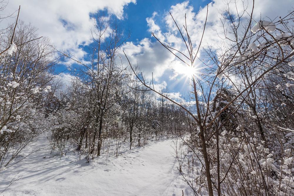 Fresh snow in Morton Forest