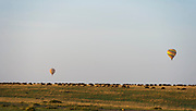 Wildebeests in their annual great migration in Maasai Mara (Kenya) as tourists enjoy their hot air balloon safari.