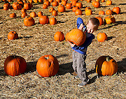 Oliver Darby, 9, of Lawrenceville struggles to lift a pumpkin at Randy's Pumpkin Patch on Thursday in Lawrenceville. (Staff Photo: David Welker)