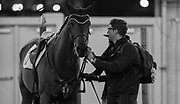 DANNY INGRATTA the groom for AMY MILLAR (CAN) prepares horse Heros during the Greenhawk Canadian Championship at The Royal Horse Show in Toronto, Ontario. MILLAR finished 5th in the event.