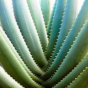 Tropical botanical photograph