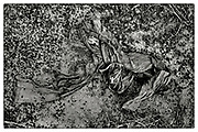 """A pair of mud-encrusted trousers lie half-buried in the mud on farmland located in the Chaiyaphum Province of Northeast Thailand, 2013. From the series: """"Pha Koeng"""" (2011-2017)."""