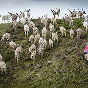 Mongolia Reindeer Herders