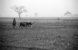 BANGLADESH DINAJPUR OCT94 - Paddy fields in winter in rural Dinajpur, northern Bangladesh. Temperatures drop to nearly zero degrees in the north of the country as the cold winds from the Himalayas reach the country...jre/Photo by Jiri Rezac..© Jiri Rezac 1994