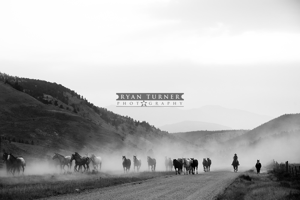 Montana fun with horses.  Limited Edition - 75.