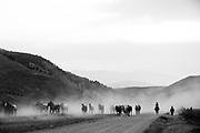 Montana fun with horses.