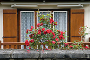 rose garden in front of a house in rural France