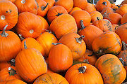 Truckload of pumpkins for sale in Upstate New York