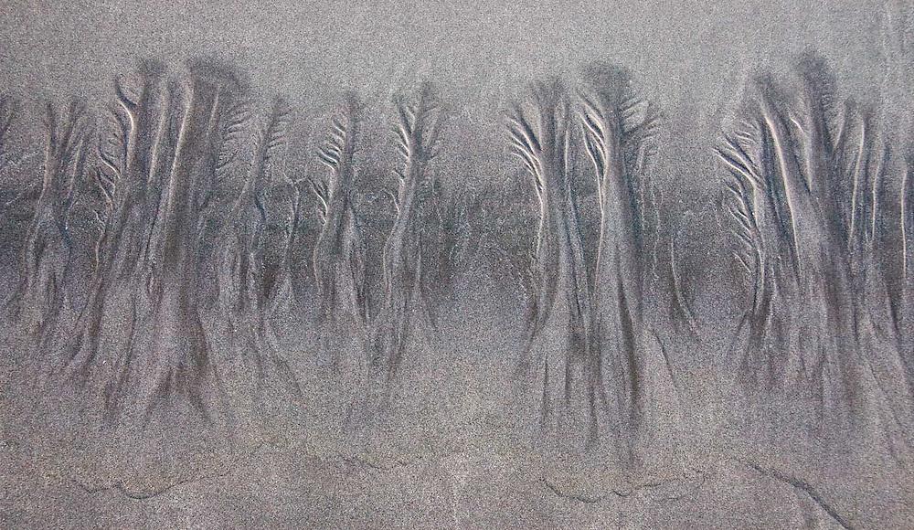 Beach Trees