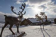 Reinsdyret ved Smelthytta, R&oslash;rosmuseet. Statuen er til minne om den velkjente historien om reinsdyret som skal ha sparket unna mosen, slik at Hans Olsen Aasen fant malmstenen i Storvola. Statuen er en gave fra R&oslash;ros Sparebank ved bankens 125 &aring;rs-jubileum og ble avduka 13. august i 1967. Kunstneren er Skule Waksvik.  Statuen har denne inskripsjonen:<br /> Reinsbukken falt for Hans Aasens skott<br /> Sparket i d&oslash;dskampen unna m&aring;ss&aring;en p&aring; fjellrabben<br /> K&aring;pp&aring;rmalmen skinte fram<br /> og med den ble Bergstaden til R&oslash;rosmuseet, Museene i S&oslash;r-Tr&oslash;ndelag, MIST.