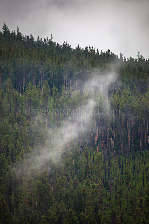 "Trees shrouded in low cloud and fog at Dunraven Pass, Yellowstone National Park, Wyoming. This mage can be licensed via Millennium Images. Contact me for more details, or email mail@milim.com For prints, contact me, or click ""add to cart"" to some standard print options."