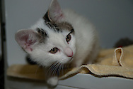 This is ACE a kitten at the Chemung County SPCA.
