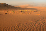 Sand dunes near Serra Cafema Camp, Wilderness Safaris, Kaokoland, Kunene Region, Namibia