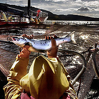 A worker at a Salmon farm on Loch Linnhe near Fort William.Photograph David Cheskin.