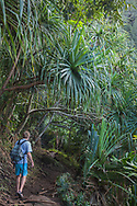 Hiker on the Kalalau Trail on the Na Pali Coast,  passing under hala trees in topical forest on the steep slopes of northeastern Kauai, Hawaii,  MR, © 2010 David A. Ponton