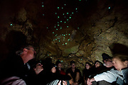 Tourists view glow worms (Arachnocampa luminosa) in a cave on the South Island of New Zealand