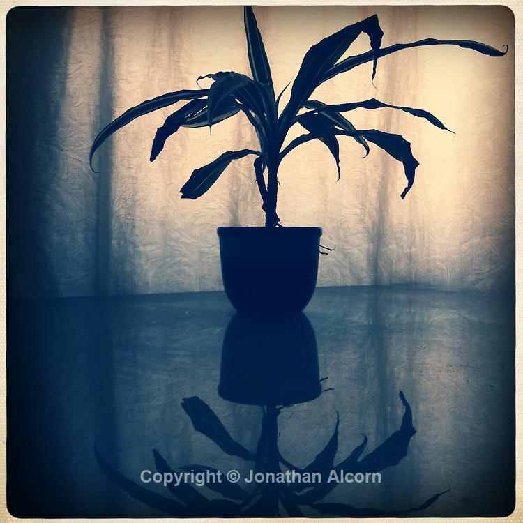 Plant still-life reflection
