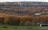 Horses graze in a field off County Route 7 in the Town of Gardiner with the colorful Shawangunks in the background on Oct. 26, 2010.