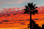 A palm tree is silhouetted against the morning sky with colors on clouds, Sunday, March. 9, 2014, in Los Angeles, California. (Photo by Ringo Chiu/PHOTOFORMULA.com)