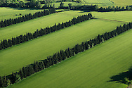 France, Languedoc Roussillon, Gard (30), région Uzès, région St. Chaptes, haies coupe vent, vue aérienne