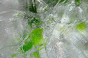 ice green pattern