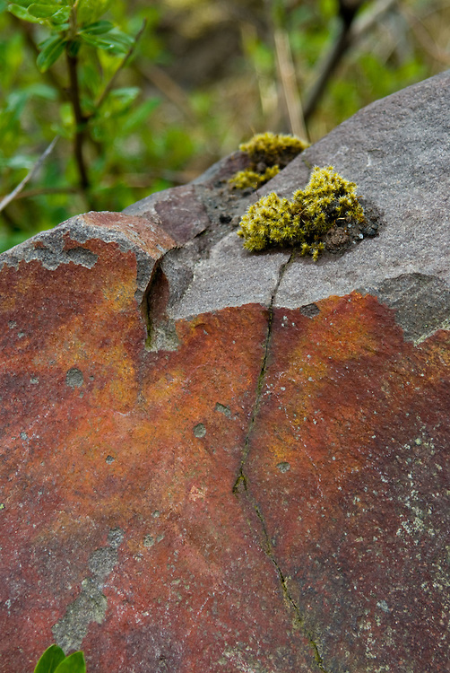 Rock with Lichen, Mt. St. Helens National Volcanic Monument, Washington, US