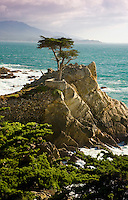 The Lone Cypress Tree on 17 mile Drive in Pebble Beach CA.Photo Brian Baer