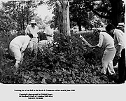 Looking for a lost Ball at the lords & Commons cricket match. June 1986.<br />