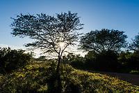 Acacia karoo trees at dawn, Bontebok National Park, Western Cape, South Africa