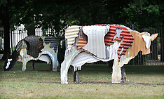 Canberra-Cow sculptures on High Commission Lawn