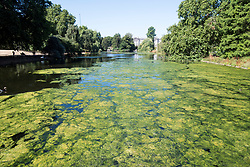 © Licensed to London News Pictures. 23/07/2018. London, UK. Green algae covers the pond at St James's Park central London, as the hot weather continues in the capital. Forecasters are predicting record temperatures this week. Photo credit: Ben Cawthra/LNP