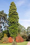 Autumn colours in National arboretum, Westonbirt arboretum, Gloucestershire, England, UK